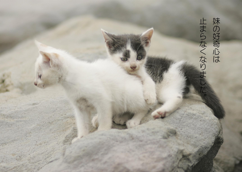 写真絵本『cats in the rock』~僕はここに生きています~
