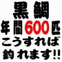 黒鯛(チヌ)釣り年間600匹 『落とし込み&前打ち』 こうすれば釣れます!!