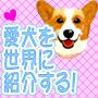 犬の動画撮影編集公開マニュアル