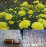 天然素材の抽出液