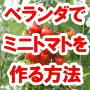 ベランダでミニトマトを作る!初心者のための家庭菜園教材『ベランダ・ミニトマト栽培・マスター講座』
