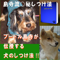 島寺流○秘しつけ法